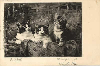 cat kittens artist  signed early 1900 postcard