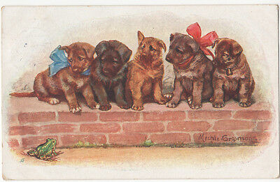 Boxer Puppy Dogs Looking at Frog by Mechls Graomons? Postcard Postmarked 1929