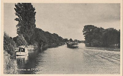 POSTCARD  MIDDLESEX  SHEPPERTON  The Thames