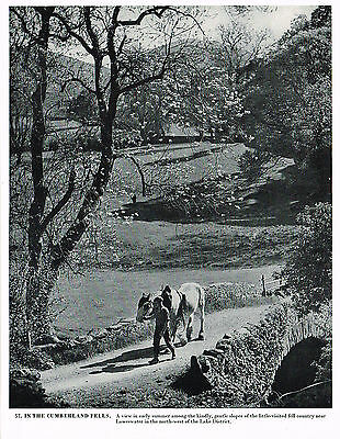 In The Cumberland Fells, Lake District - Vintage 1950s Print