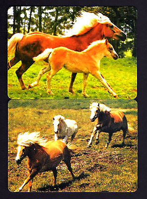 WIDE Swap/Playing Cards - Horses x 2