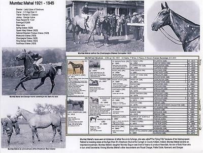 """NEW Horse Racing """"the Flying Filly"""" MUMTAZ MAHAL  picture photo pedigree"""
