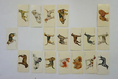Weston's Dog Series 40/50 cards plus 6 duplicates issued 1960's