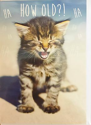 How Old Cute Kitten Cat Funny Large Birthday Greeting Card Lovers Humorous