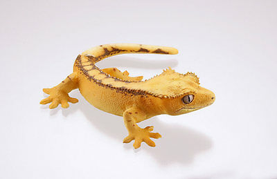 Kaiyodo Museum Q Gecko Part 2 Yellow Crested Gecko Lizard Figure