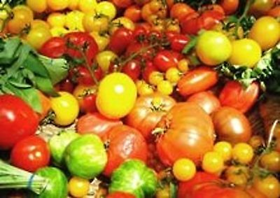 Tomato Heirloom Mix Seeds Vegetable Garden Pot 40 Seed Pack