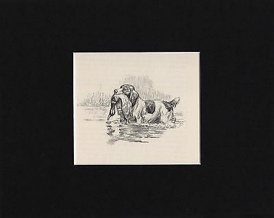 Vintage Edwin Megergee English Springer Spaniel Dog W Game Print 1953 Matted