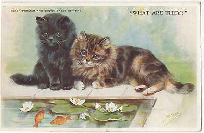 Cute Kitten Cats Watching Goldfish by Mabel Gear Postcard PM 1957