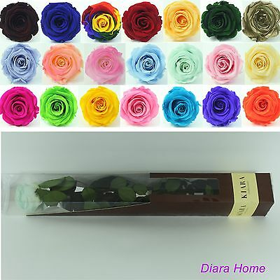 Minty Rose Flower Preserved 100% Fresh Natural last up to 3 years no water