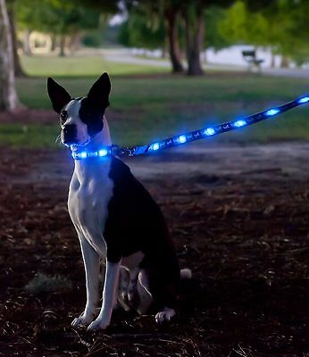 Dog e Glow Light up dog lead or collar various designs and sizes Night LED  Safe