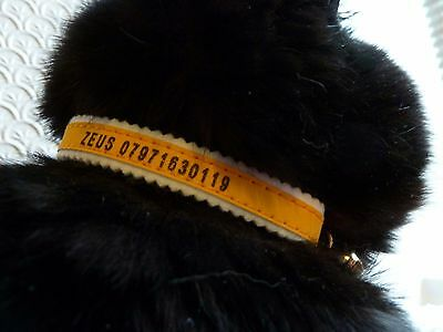 Cat/Kitten Personalised Collar Made by Ancol, Reflective Safety Elastic Collars