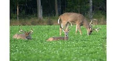 3 Lb  Alfalfa Red Clover Ladino Clover Crimson Clover Forage Food Plot Seed Mix