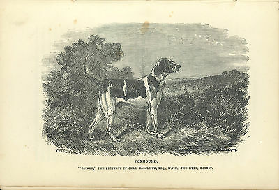 Bookplate Foxhound Gainer, C Radcliffe, Dorset, The Dog by Idstone, Third Ed