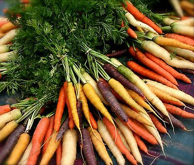 Rainbow Carrot Seeds Heirloom Multi Colour Vegetable Garden 300 Seed Pack