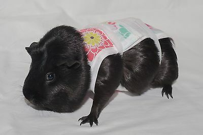 Piggy Pants Guinea Pig Diapers-Flowers
