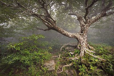Nature Green Tree Branches Forest Wall Mural Photo Wallpaper GIANT WALL DECOR