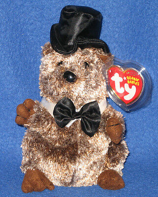 TY PUNXSUTAWNEY PHIL 2008 GROUNDHOG BEANIE BABY - MINT with MINT TAGS