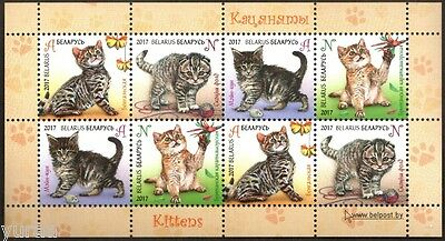Belarus - 2017 - Kittens, Cats, m/s of 8v