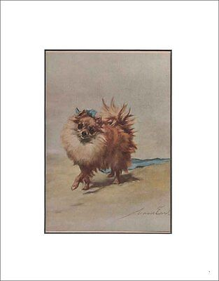 Antique Pomeranian Dog Print by Maud Earl 1912 8x10 Matted
