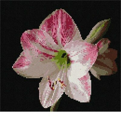 Indian Paintbrush Needlepoint Kit or Canvas Floral//Flower//Nature