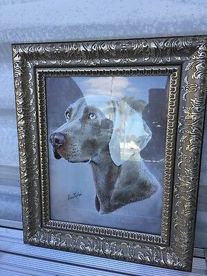 Framed Weimaraner Picture