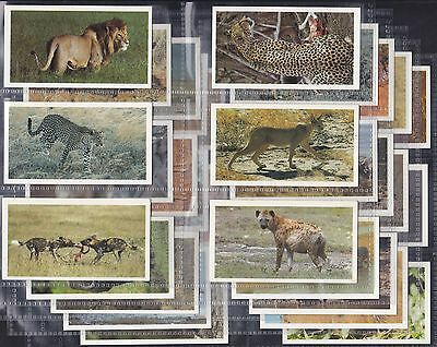 Grandee, African Wildlife, Complete Set Of 30 Issued In 1990. All Scanned.