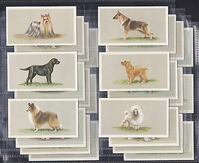 Dogs, Complete Set Of 25, Grandee Top Dogs. All Scanned.