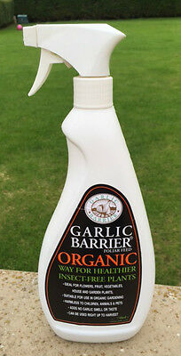 Organic Garlic Insecticide Deters Aphids Caterpillar Whitefly Slugs & Snails