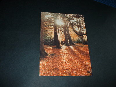 NORTHERN IRELAND  FOREST PARK WALK TOLLYMORE Co DOWN  POSTCARD