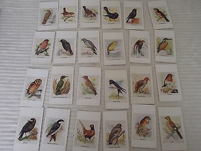 Observer Picture Cards British Birds