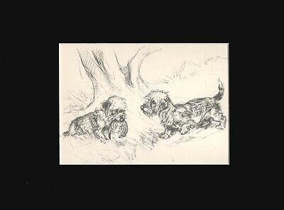 Print 1936 Print Dandie Dinmont Terrier Dogs by Vernon Stokes Matted 9X12