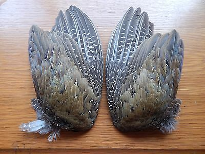 Pair Part Melanistic  Cock Pheasant  Wings Feathers Bird Wings Fly Tying