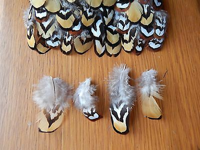 50 + Reeves Cock Pheasant  Feathers Fly Tying / Arts / Crafts