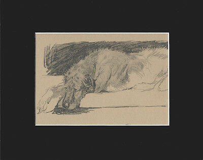 VINTAGE Irish Wolfhound Dog 1934 Print RELAXING by Cecil Aldin 8X10