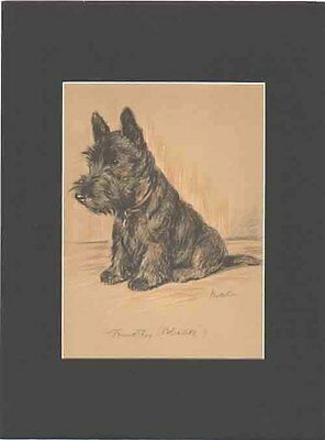 Scottish Terrier Dog CUTE 1940 Print by Lucy Dawson 9X12 Matted