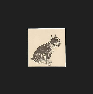 Vintage Boston Terrier Dog Print by Diana Thorne 1936 Matted 9x9