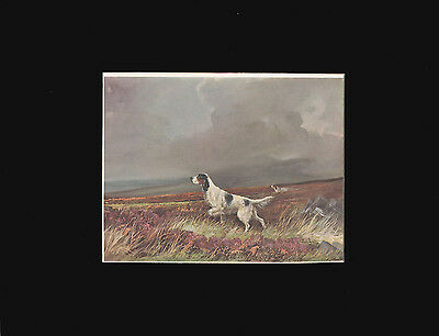Vintage English Setter Dog Print 1931 by R. Ward Binks ~ 9x12 Mat ~ NICE