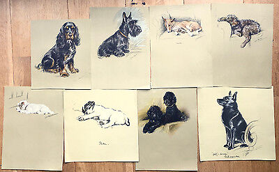 Lot of 8 x orig Lucy Dawson prints, terriers, spaniela, Alsatian, dogs, canine