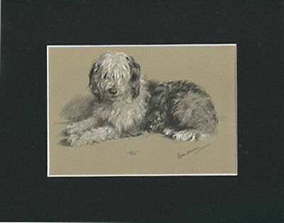 "Old English Sheepdog  by Lucy Dawson 1946  8X10"" Matted Print"