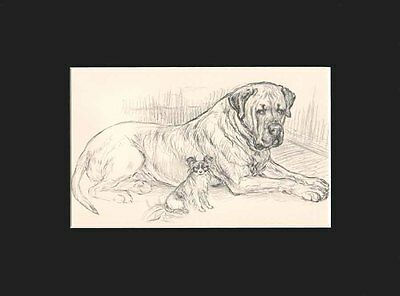 Vintage Bullmastiff & Papillon Dogs Large Print by K.F Barker - Matted 10 x 13
