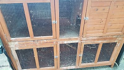 Rabbit and Guinea Pig Hutch
