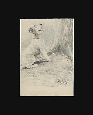 Wire Fox Terrier Dog Puppy Print 1942  Marguerite Kirmse  8X10 Matted UP A  TREE