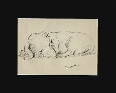 VINTAGE CUTE! Dachshund Puppy Dog 1940 Print  by Lucy Dawson 8X10 SNOODLE