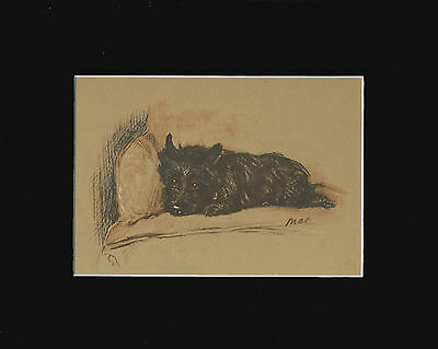 """Black Cairn Terrier Dog Sepia Print by Lucy Dawson 1937  8X10"""" Matted"""