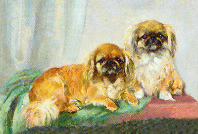 Pekingese Dog Drawing by Mabel Gear - LARGE New Blank Note Cards