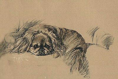 Pekingese Puppy Dog Drawing by Lucy Dawson 1937 - LARGE New Blank Note Cards