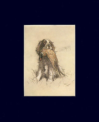 English Springer Spaniel w/ Game Dog Cecil Aldin NICE 1928 print Matted 8 X 10