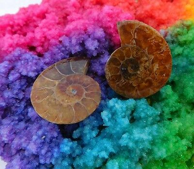 42 Cts. 100% Natural Matched Pair Of Ammonite Shell  Mineral Specimen (NH116)