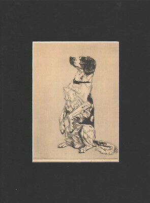 VINTAGE Pointer Dog  Print 1932 by Diana Thorne 9  X 12 Mat