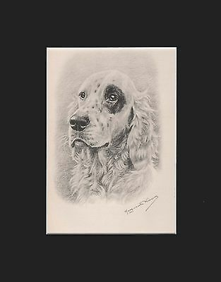 """EnglishSetter Dog Portrait by M. Kirmse Matted Print 1938  8x10"""" Limited Edition"""